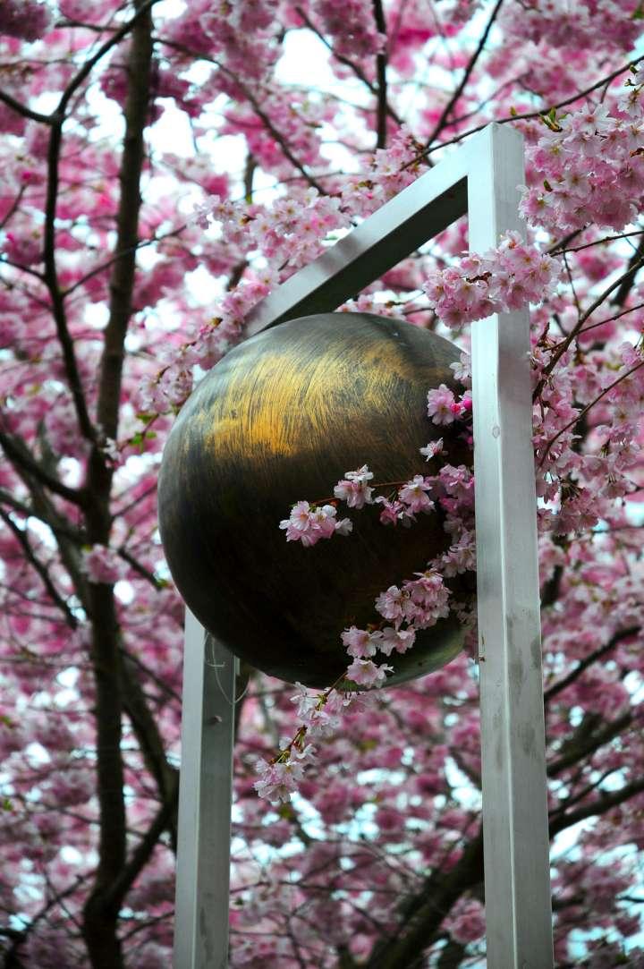 Innstadtpark - Bildende Kunst unter Kirschblüten - Gleich in der Nähe des Findlingbrunnen, wo Ruhebänke zum Verweilen auffordern