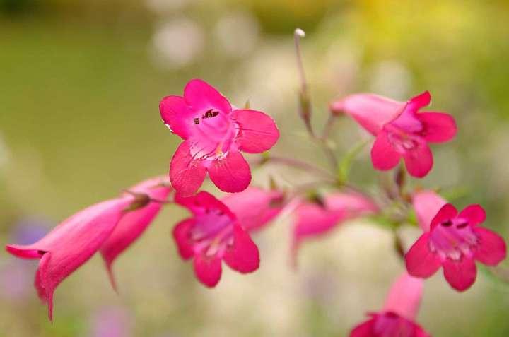 Schade, dass ich nicht alle pflanzlichen Schönheiten beim Namen kenne. Wenn der Name bekannt wird, werde ich ihn hier ergänzen.