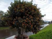 Der Spazierweg entlang der Mangfall war mit blühenden Topfpflanzen geschmückt - Im Hintergrund ist der Wendelstein schön zu sehen