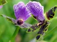 Orchideen im Blumenhaus der Landesgartenschau Rosenheim