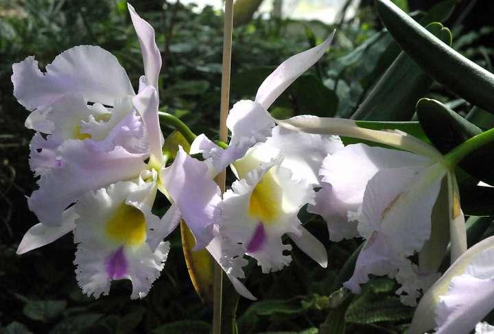 Orchideen im Botanischen Garten in München
