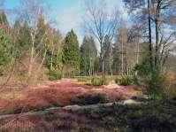 Heidelandschaft im Botanischen Garten in München