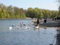 Das milde Wetter am Karfreitag 2011 lockt viele Mühldorfer an das nahe Innufer zum Erholen, Sonnetanken, Schwänefüttern