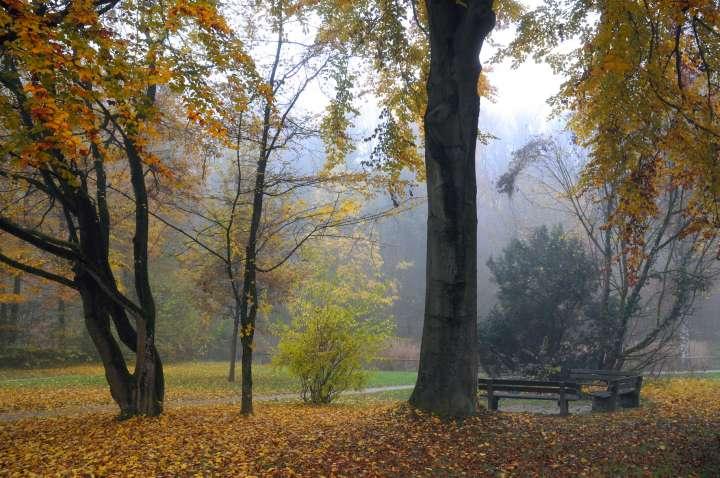 Am Bahnhoffußweg zwischen dem Pflegschloß und den Stadtweihern bietet auch der November mit der farbenprächtigen Buchenlaubfärbung und dem leichten Nebel, der sich über die Stadtweiher legt, ein ruhiges, friedliches Bild