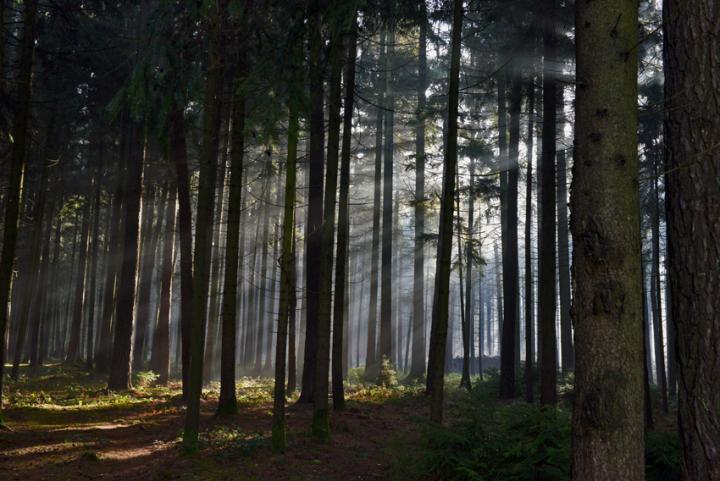 Das Naherholungsgebiet Starkheim lädt am schneelosen 24. Dezember 2013 zu einem Waldspaziergang ein. Ich habe den Morgen genutzt um Moos für die Weihnachtskrippe zu holen.